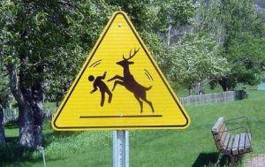 deer_attack_area