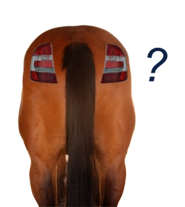 Horse-butt-with-tail-lights